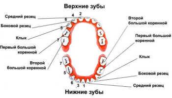 Глазные зубы у ребенка