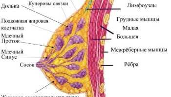 Симптомы рака молочной железы на ранней стадии